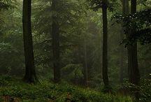 Forest / Idealne miejsca