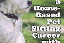 Pet Careers / An inspirational board filled with pet career advice, ideas and tips for the animal lover. Dive in and view all the wonderful pet career options that are available.