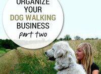 Dog Careers / Dog Careers