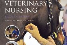 Horse Careers / Horse Careers | Be inspired by the horse careers that are available | Equine Careers