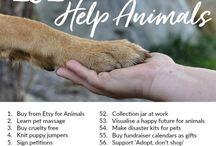 Help Animals / Help Animals