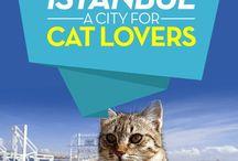 Cat Love / Cat Love