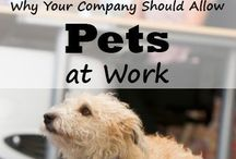 Take Your Pet To Work / Take Your Pets To Work