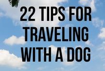 Travel with Pets / Travel with Pets