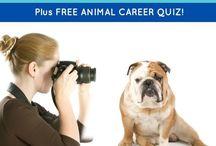 Creative Careers For Animal Lovers / Creative Careers For Animal Lovers