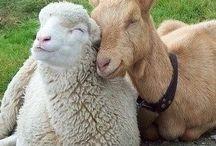 Animal Love / Animal Love