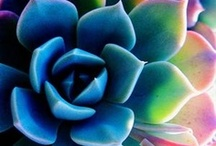 Succulent Garden Inspiration / All about Succulent Gardening  / by Alison Wright