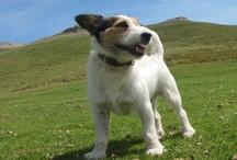 Perros / El mejor amigo del hombre y uno de mis mejores amigos.