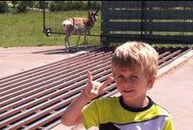 Antelopes/Lopers