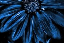 Feeling blue / by ⭐️ Alessia ⭐️