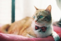 Gatos / Acho que Deus estava de bem com a vida quando criou um bicho tão bonito como o gato.