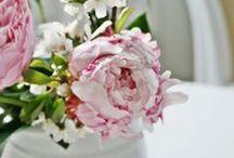 """""""Voorjaars Rose"""""""