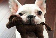 Cães / A vida fica melhor com eles por perto.