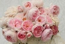 Flores / Flores deixam a vida mais bonita