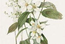 """""""Botanische Prints"""""""