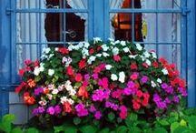 Jardins / Jardins de todos os tamanhos para ter a primavera perto de você o ano todo