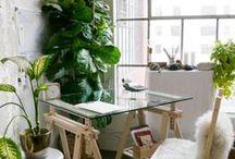 Plantas no Interior / Uma casa mais verde e mais viva.