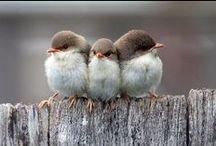 birds, nature & poetry