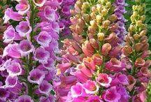 Flowers 2 / by SJ Rzeminski