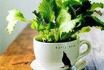 Jardins em Xícaras / Não é preciso muito espaço para ter um jardim, basta uma xícara.