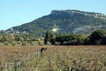 Cassis Wine Tours