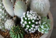 plants / #ilovesucculentsandcacti
