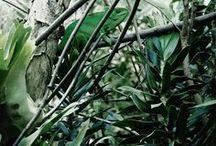 Inspiration   vert / Vert gazon, bouteille de vert, vert tige et feuille à l en vert, vivifiant, oxygène, biotope, verdure, mentholé, vie, présence, impose, nature, arbre, chlorophylle
