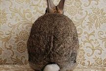 ☻ Pâques / La fête de Pâques : Œufs et cocottes, chocolats et chasses aux trésors mais aussi lapines déguisées et mise en scènes et décors