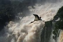 Iguazú Falls area / Pictures found on pinterest from Iguazú Falls area in Misiones, Argentina, in South America.