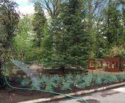    barnes arboretum / arboretum of the barnes foundation   300 north latches lane   merion pennsylvania