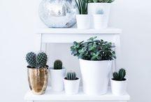 Interior - Green Inspiration