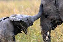 Elephant LOVE <3 / Only elephants :) #elephants
