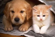 Quatro patas / Cachorros e gatos