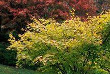 beautiful shrubs and trees
