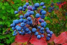 Lovely autumn plant species