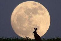 ☽ Moon ☽