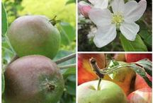 Orchards & Fruits