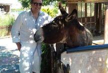 Donkey's- Γαιδουράκια / Γαιδουράκια