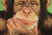 Chimbanzee / ♡ clever animals