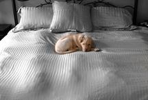 Pups / by Matthew Magnone