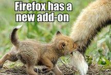 Firefox / by Lori Walker