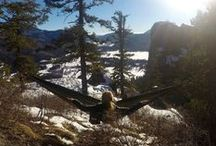 Camping Hammocks / The best parachute and camping hammocks are made to be lightweight, waterproof and versatile.