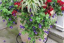 gardens, plants,...