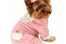 pet clothes :-)