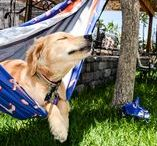 National Hammock Day / Oh only the best day of the year! National Hammock Day is here.  Enter for a chance to win Free Hammocks!