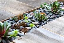 Garden ideas / by Miriam Domitila