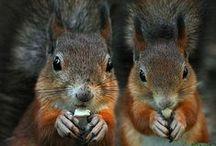 Animals / Tierbabys, außergewöhnliche Tiere,
