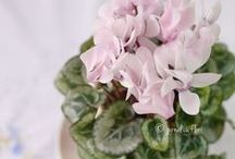 Jurnal cu flori - blog / Blog de mamica: Flori, retete delicioase, broderie, fotografie, Romania, Transylvania