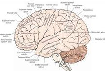 Neuroanatomy/neurology study / Can I call you pia mater? Cause you're always on my mind.
