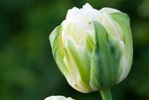 〰〰 Bloemen 〰〰